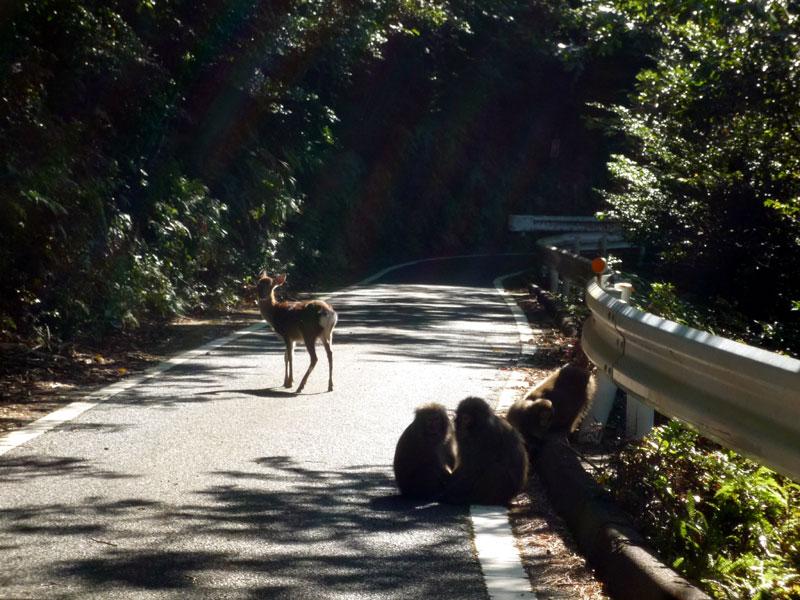 屋久島の旅2_b0216341_2245119.jpg