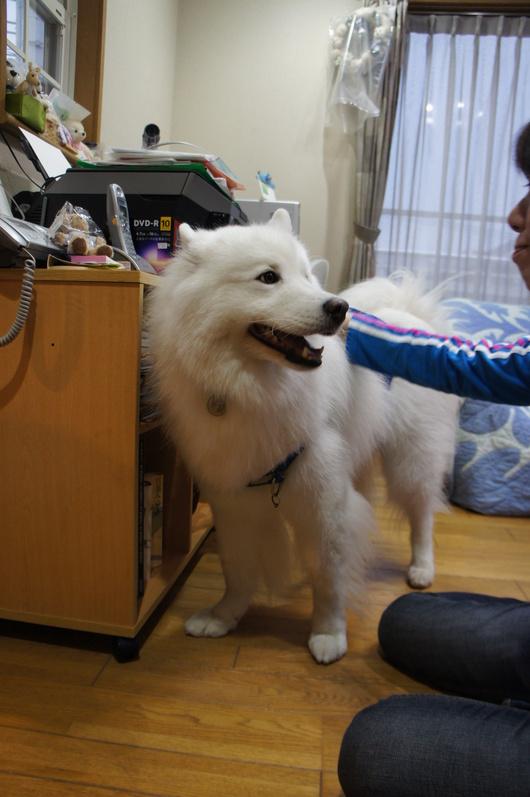 北海道からのおともだち_f0128542_04193.jpg
