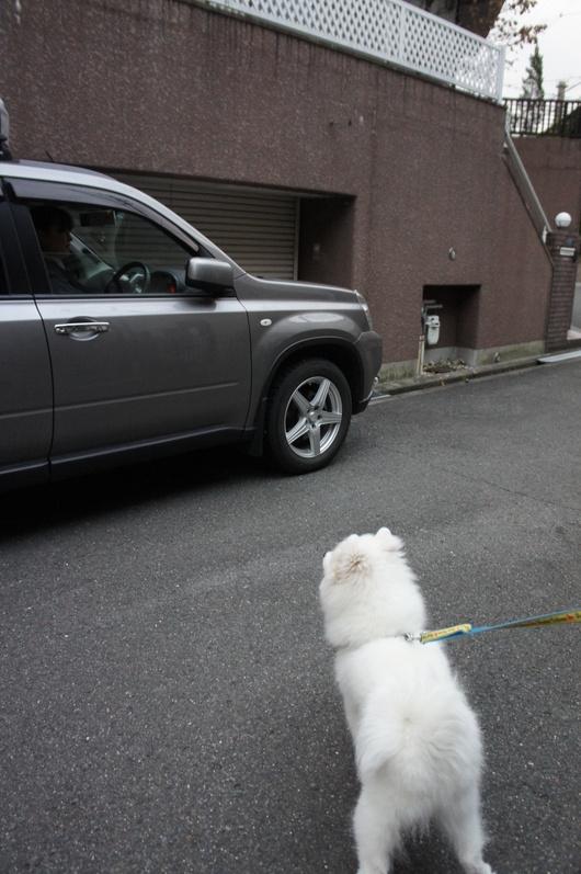 北海道からのおともだち_f0128542_045226.jpg