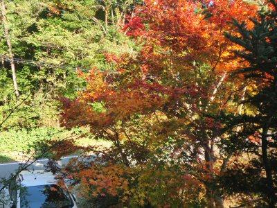庭の紅葉_f0019247_102521.jpg