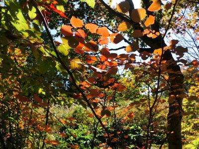 庭の紅葉_f0019247_1027475.jpg