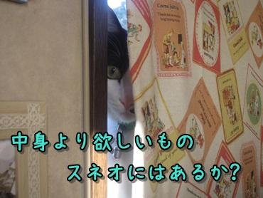 b0151748_12173489.jpg