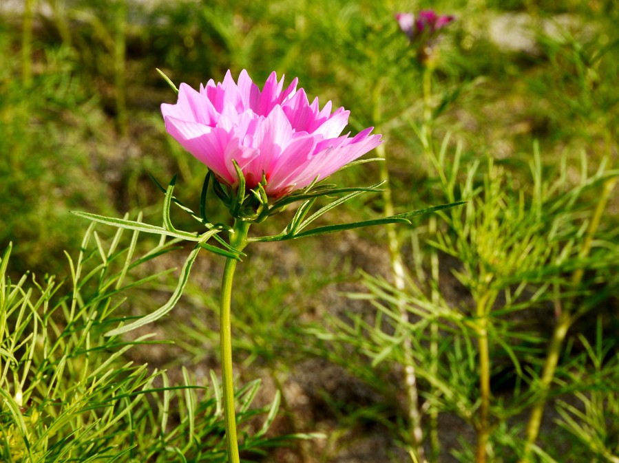 和歌山県植物公園緑花センター _b0093754_21421894.jpg