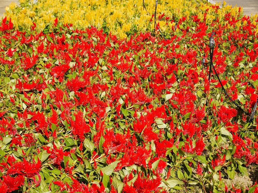 和歌山県植物公園緑花センター _b0093754_21425795.jpg