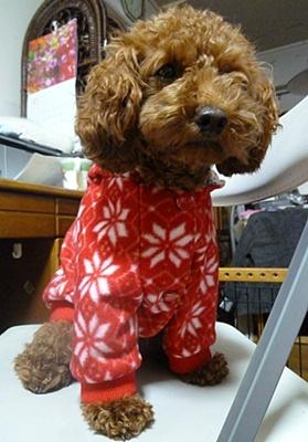 ♪♪さくら♪♪の冬服、リバーシブルのジャンパーです_b0175688_2147154.jpg
