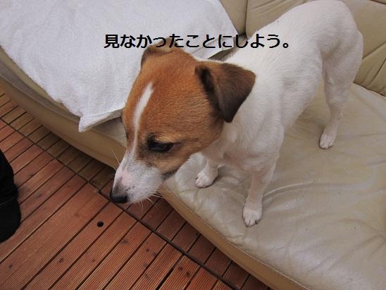 f0106692_1942580.jpg