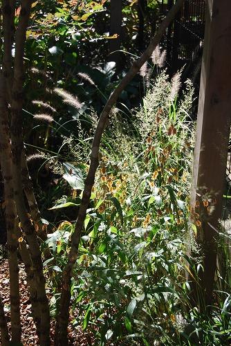 10月の庭…_c0124100_20552461.jpg