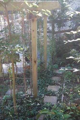 10月の庭…_c0124100_2057582.jpg