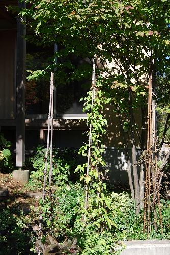 10月の庭…_c0124100_20583271.jpg