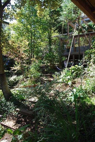 10月の庭…_c0124100_2059838.jpg
