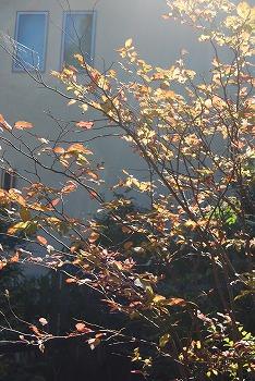 10月の庭…_c0124100_2125732.jpg