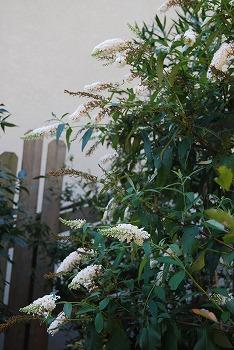 10月の庭…_c0124100_2131620.jpg