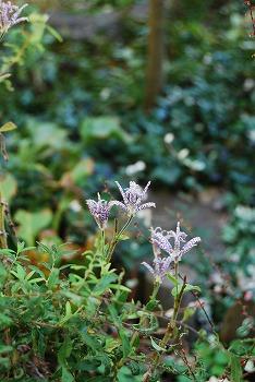 10月の庭…_c0124100_2133581.jpg