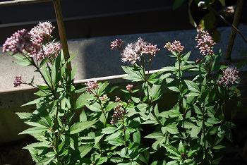 10月の庭…_c0124100_214312.jpg