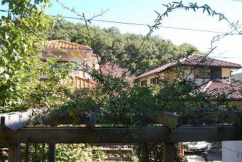 10月の庭…_c0124100_214792.jpg
