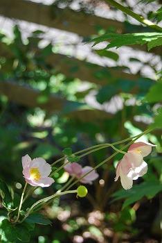 10月の庭…_c0124100_2151859.jpg