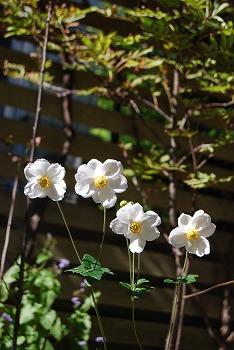 10月の庭…_c0124100_215297.jpg
