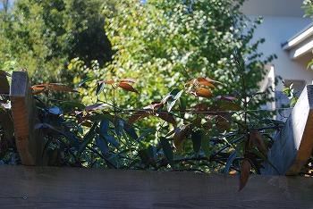 10月の庭…_c0124100_216653.jpg