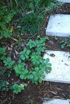 10月の庭…_c0124100_2173491.jpg