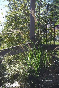 10月の庭…_c0124100_2174828.jpg
