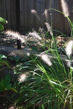 10月の庭…_c0124100_2184058.jpg
