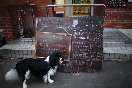 連日の西岡公園で熊注意。_c0051132_19523686.jpg