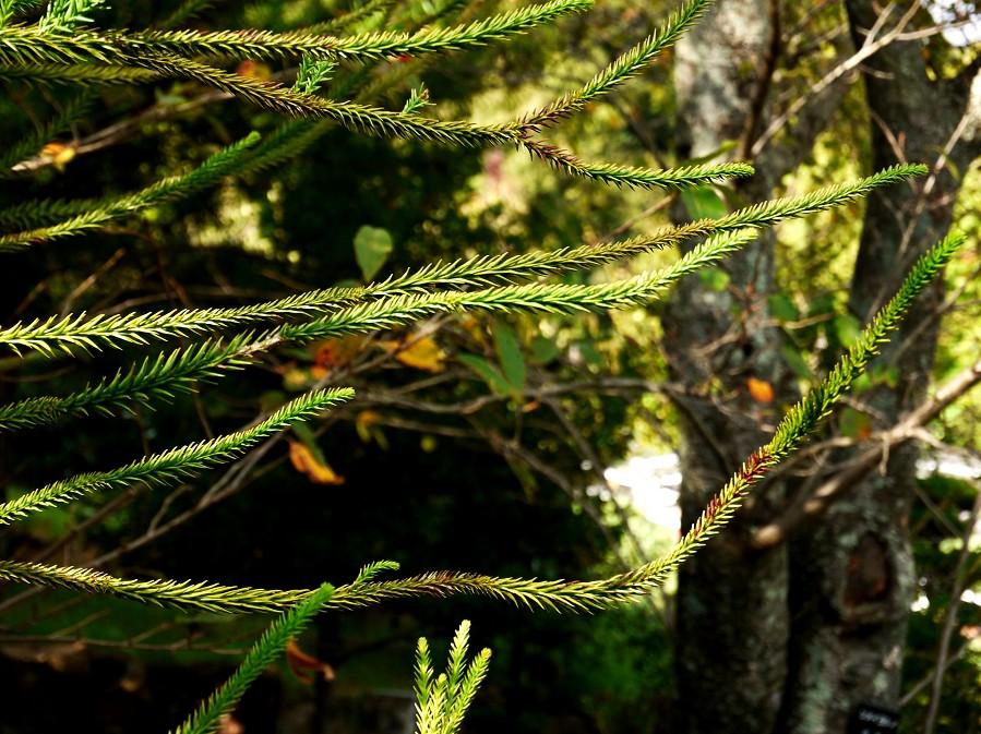 和歌山県植物公園緑花センター _b0093754_20521380.jpg