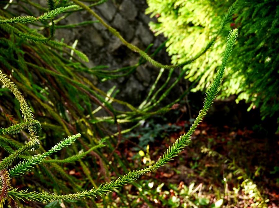 和歌山県植物公園緑花センター _b0093754_20524874.jpg