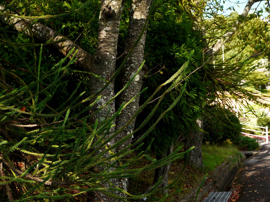 和歌山県植物公園緑花センター _b0093754_20534027.jpg