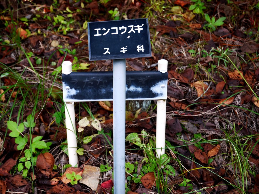 和歌山県植物公園緑花センター _b0093754_20543229.jpg