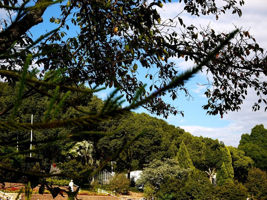 和歌山県植物公園緑花センター _b0093754_2054668.jpg