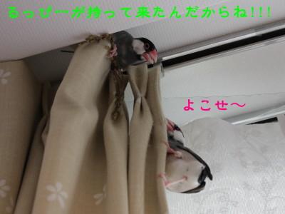 b0158061_20491419.jpg