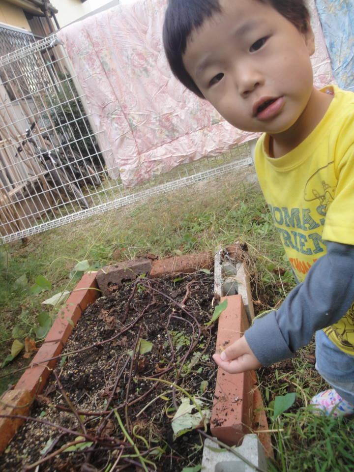 平成24年10月30日 お庭の芋掘り_c0155364_026886.jpg