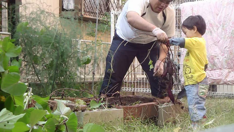 平成24年10月30日 お庭の芋掘り_c0155364_027141.jpg