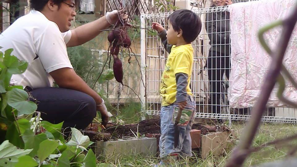 平成24年10月30日 お庭の芋掘り_c0155364_0272552.jpg