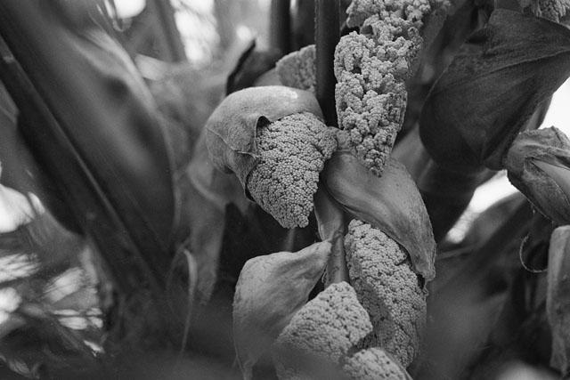 棕櫚の花_e0126186_2153340.jpg