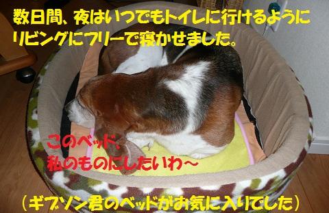 f0121712_21441360.jpg