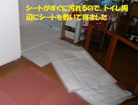 f0121712_21441946.jpg