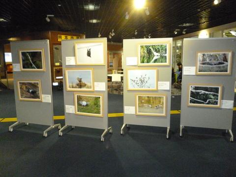 11月2~18日「野鳥の写真展」_b0228113_18121234.jpg