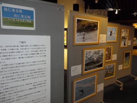 11月2~18日「野鳥の写真展」_b0228113_1826578.jpg