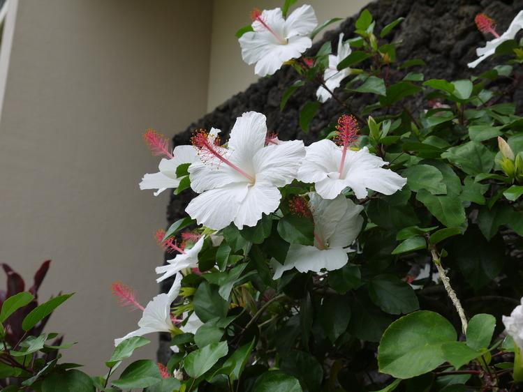 Holoholo* Kona-Honokaa-Hilo_a0224731_0264833.jpg