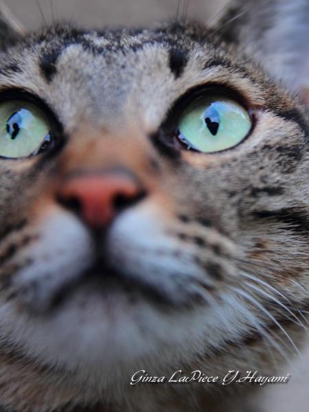 猫のいる風景  近所の三毛 近いって!_b0133053_0101159.jpg