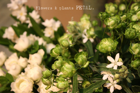 明日の花たち_d0157716_1844644.jpg
