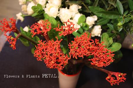 明日の花たち_d0157716_1871591.jpg