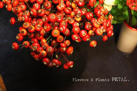明日の花たち_d0157716_1875619.jpg