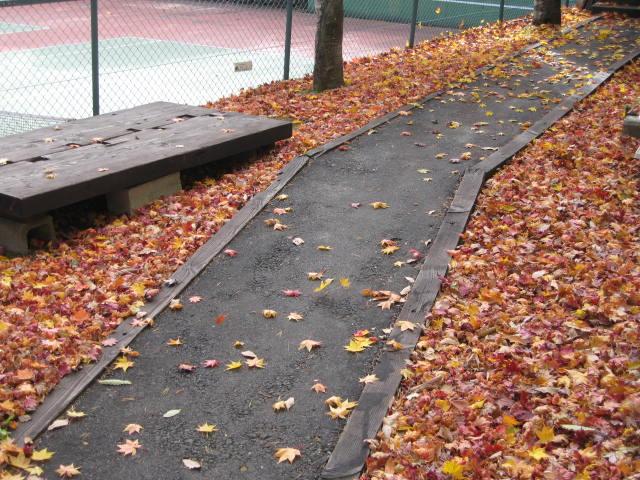 紅葉の絨毯_f0146620_233926100.jpg