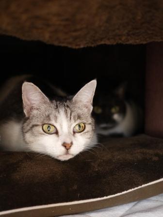 猫のお友だち リリィちゃんシュシュくん編。_a0143140_15524239.jpg