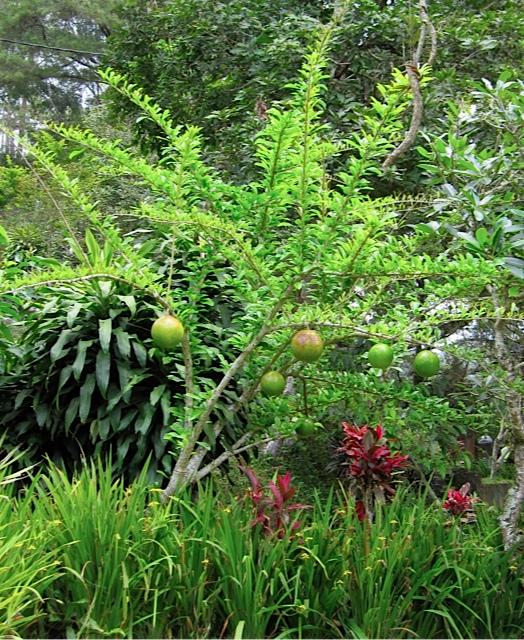 植物のお勉強_d0106242_2041849.jpg