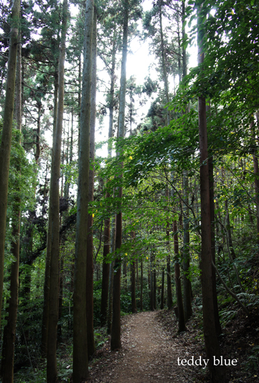 hiking in Kamakura Alps  鎌倉アルプス ハイキング_e0253364_18431834.jpg