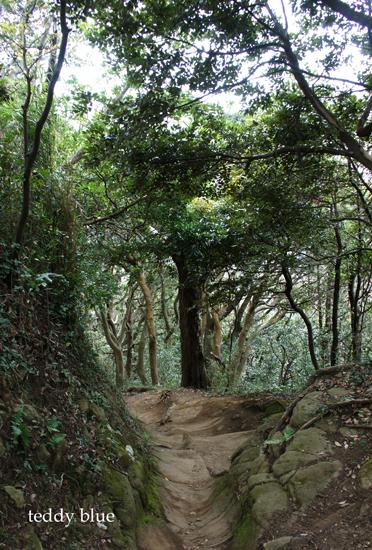 hiking in Kamakura Alps  鎌倉アルプス ハイキング_e0253364_18432877.jpg